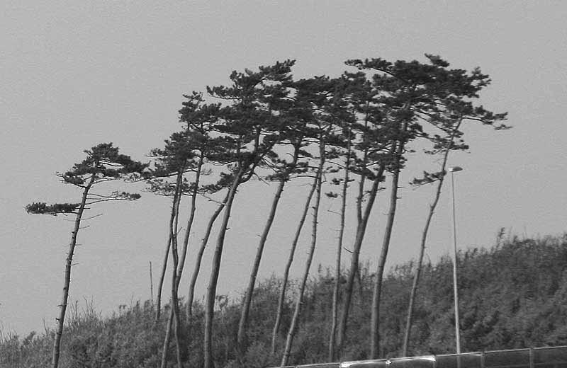 長谷川久蔵の画像 p1_24