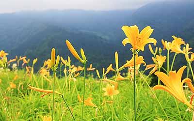 20080621_nishiyama_03.jpg